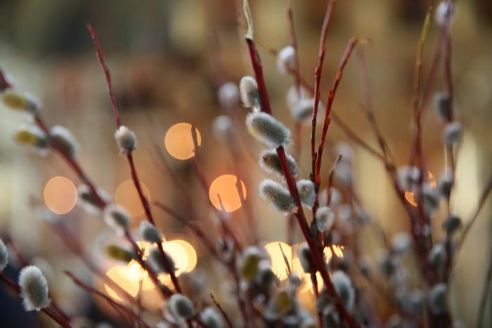 Ветви пасхальные…